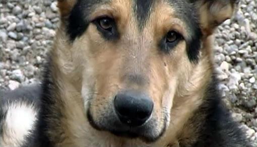 """""""Собаки и люди. Преданность и предательство."""" 1"""